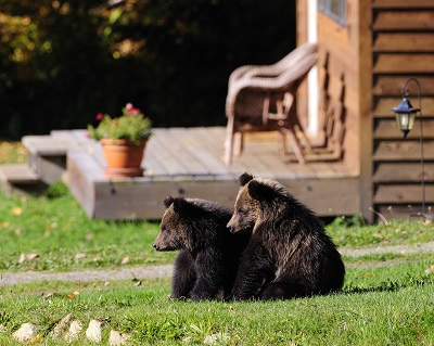 3. Grizzly Bear cubs photo Mike Wigle 1-RESIZE